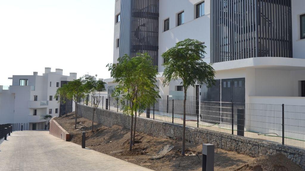 Phase IV - 2021 09 34 Melia Azedarach trees planted in Phase IV